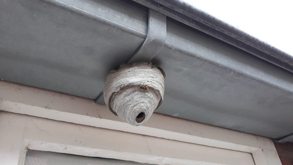 last van een wespennest